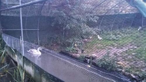 Un exemple de volière pour oiseaux d'eau chez nos copains de l'Hirondelle